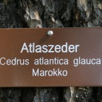 Atlaszeder__01