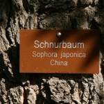 Schnurbaum__01